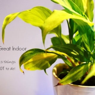 3 Tips To Great Indoor Plants and 3 things NOT to do!
