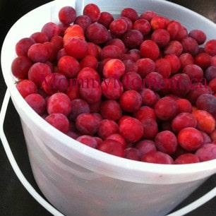 Fresh picked plums ~ Jam anyone?