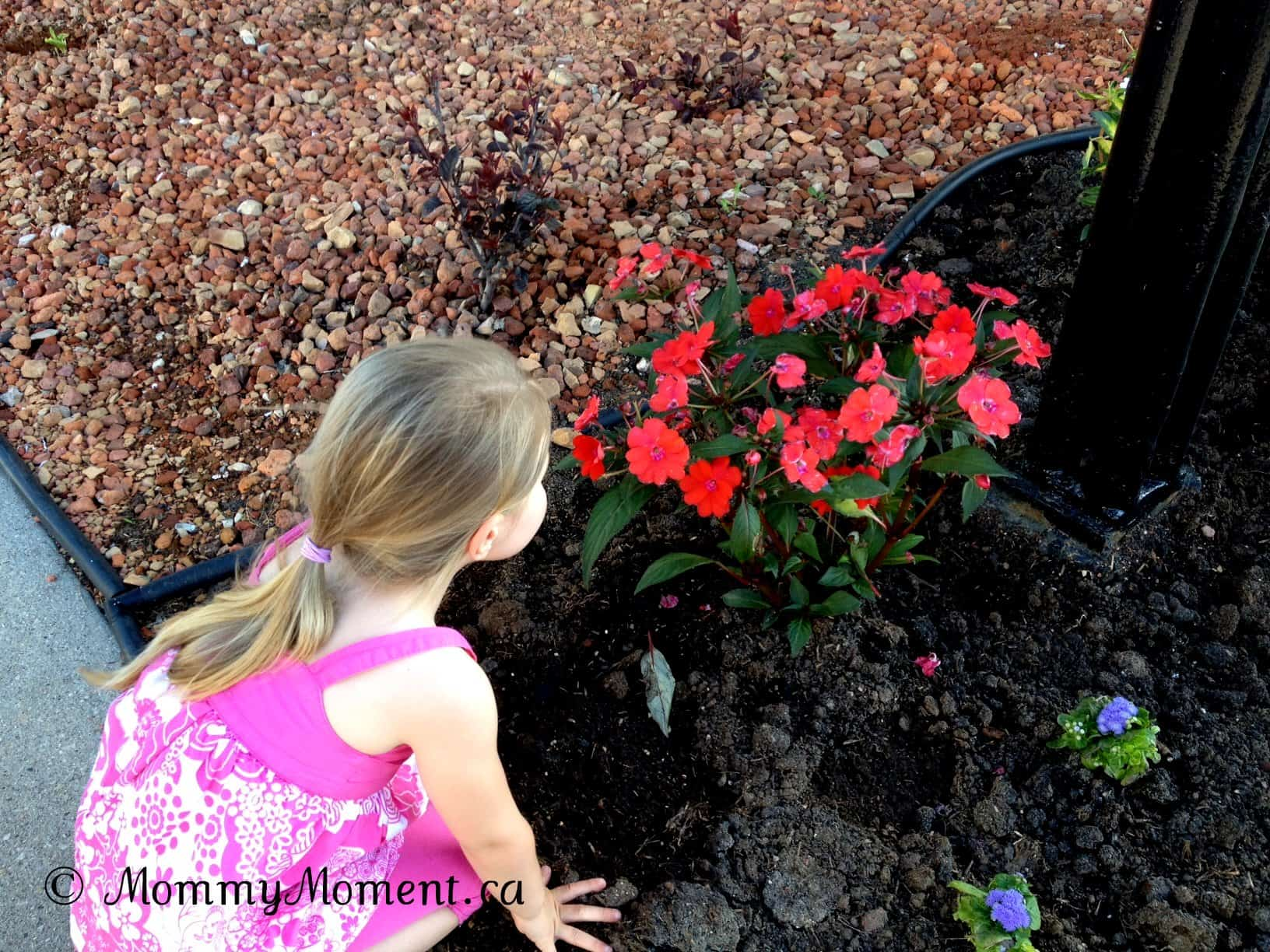Stopping to Smell the Flowers {Wordless Wednesday with #Linky}