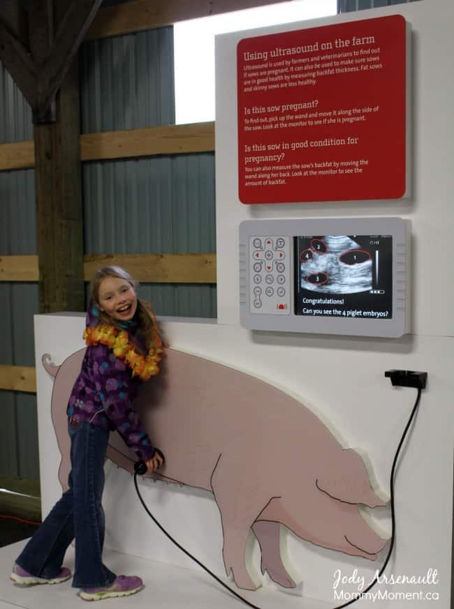 Pig-ultrasound