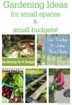 Gardening Ideas for small spaces and small budgets