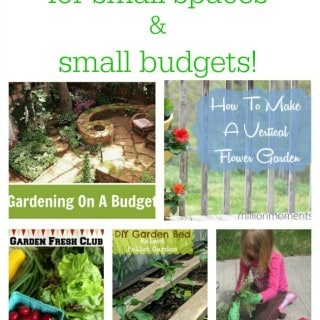 Gardening Ideas for Small Spaces and Small Budgets!