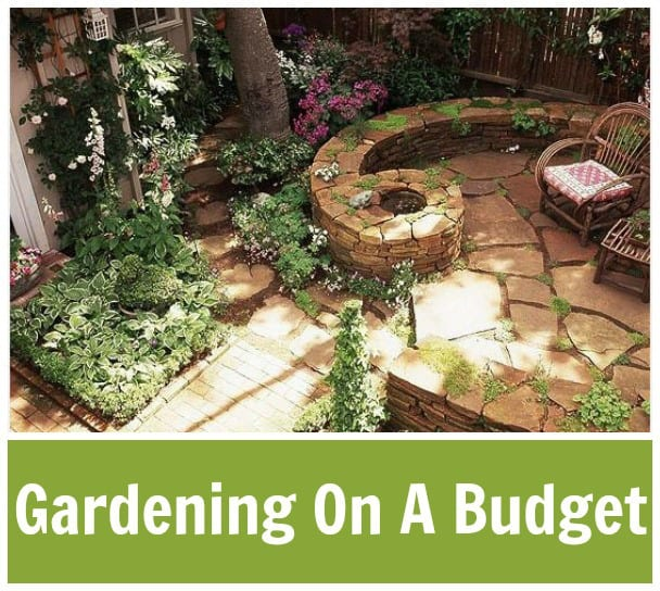 Gardening-On-A-Budget-