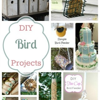 Birds, Birds, Birds! DIY Bird Projects