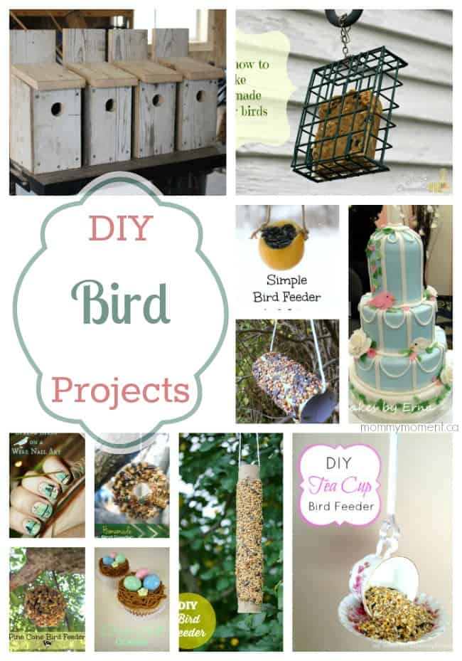 DIY Bird Projects