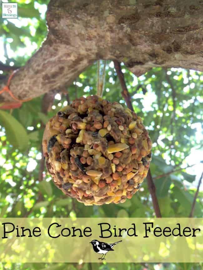 pine-cone-bird-feeder-a