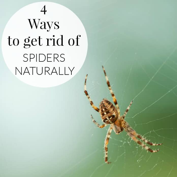 Best 28 how to get rid of spiders in christmas tree for How to get rid of spiders in house