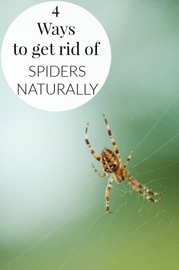 As spring and summer is quickly approaching, there will be more unwanted pests in our homes. 4 WAYS TO GET RID OF SPIDERS NATURALLY