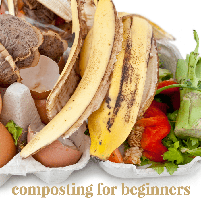 composting tips for beginners