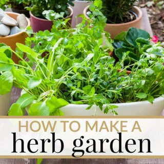 HOW TO MAKE YOUR OWN HERB GARDEN