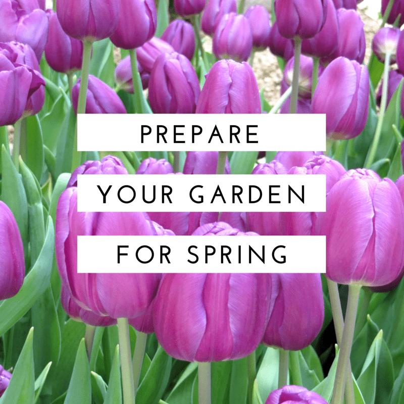 Gardening tips and tricks you will love mommy moment for Preparing for spring