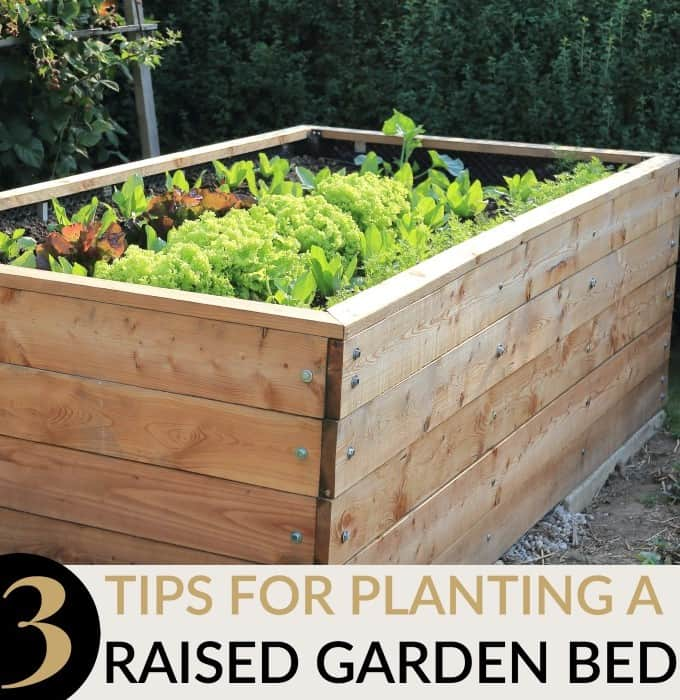 raised garden bed tips