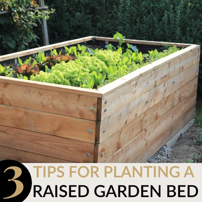 3 TIPS FOR PLANTING A RAISED GARDEN BED | Mommy Moment