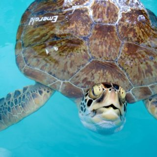 THE TURTLE HOSPITAL : RESCUE REHAB RELEASE