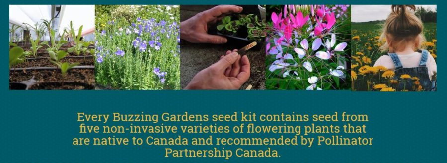 Honey Beest Pollinator Seed Kit