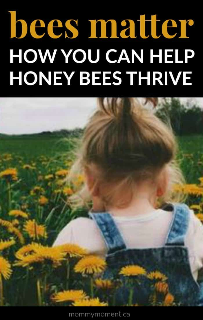 Help Honey Bees Thrive Bees Matter