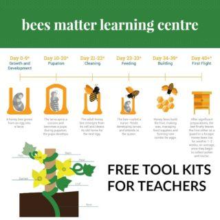 honey bees tool kit for teachers