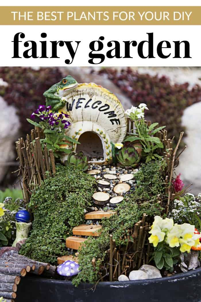 The Best Of The Worst: THE BEST PLANTS FOR YOUR DIY FAIRY GARDEN