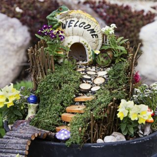 THE BEST PLANTS FOR YOUR DIY FAIRY GARDEN