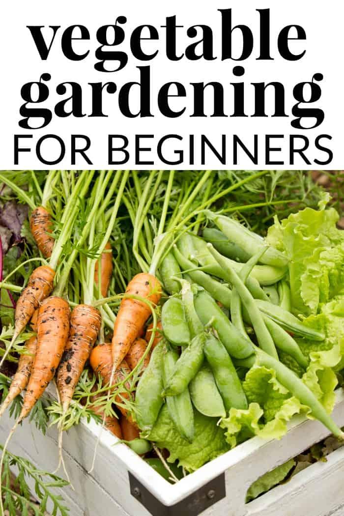 Tips for Vegetable Gardening for Beginners
