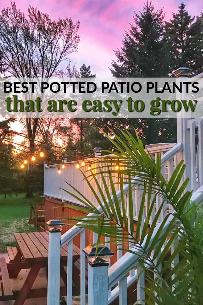easy to grow patio plants