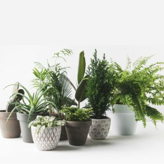 THE NOT SO OBVIOUS BENEFITS OF HAVING INDOOR HOUSE PLANTS