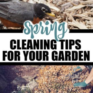 SPRING CLEANING TIPS FOR YOUR GARDEN