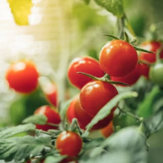GARDENING TIPS FOR THE SUMMER HEAT