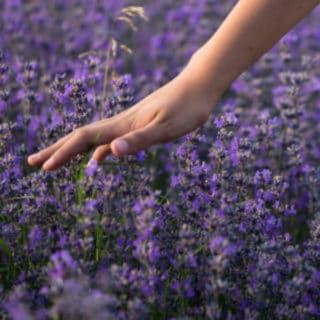 THE BEST PLANTS FOR HEALING GARDENS