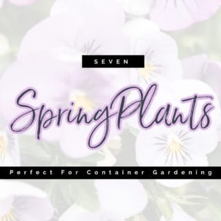 7 SPRING PLANTS FOR CONTAINER GARDENING