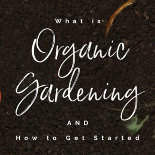 WHAT IS ORGANIC GARDENING & HOW TO GET STARTED