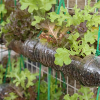 REDUCE REUSE RECYCLE – HOW TO GO GREEN IN THE GARDEN